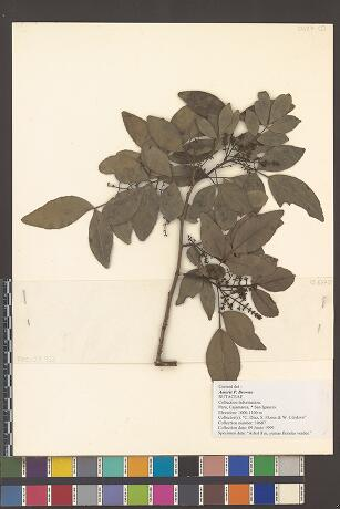 Collection Image